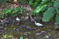 Yaba-Chigui-Lodge_Ibis-am-Flussufer