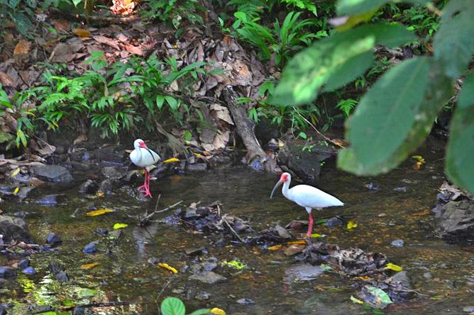 Yaba Chigui Lodge – Ibis am Flussufer