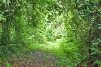 Macaw-Lodge_Aktivitaeten_Spaziergang-im-Regenwald