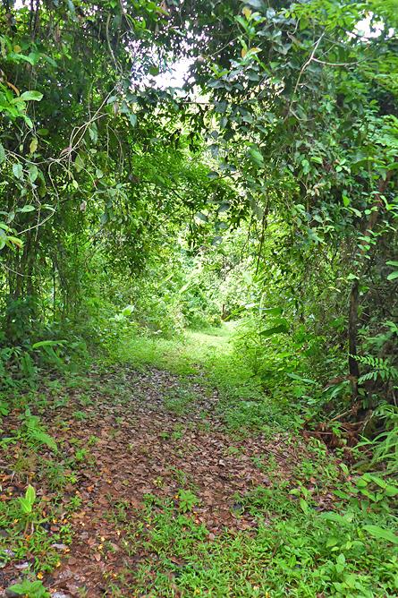 Macaw Lodge – Aktivitäten: Spaziergang im Regenwald