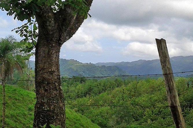 Macaw Lodge – Blick auf Turrubares-Hügel