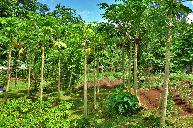 Macaw Lodge – Organische Finca, Beete