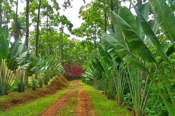 Macaw Lodge – Zufahrtsstrasse