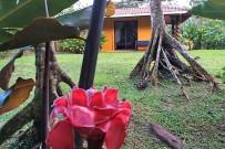 Catarata-Rio-Celeste_-Bungalow-mit-Gartensicht