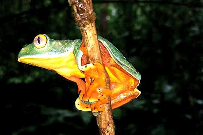 Catarata Río Celeste – Frosch