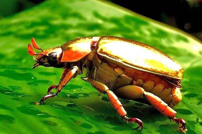 Catarata Río Celeste – Käfer