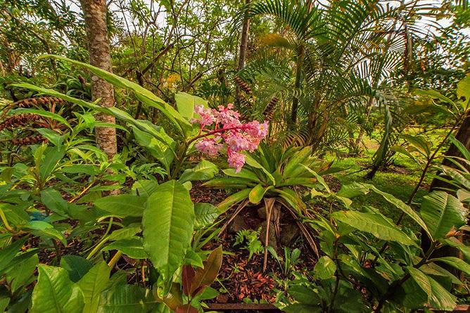 Claro de Luna – tropische Blumen