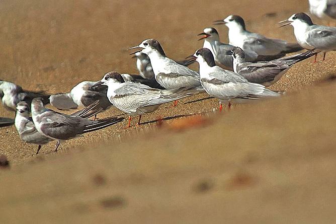 Isla Violín – Vogelbeobachtung