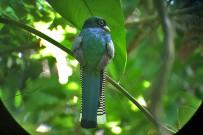 Isla-Violin_-Vogelbeobachtung