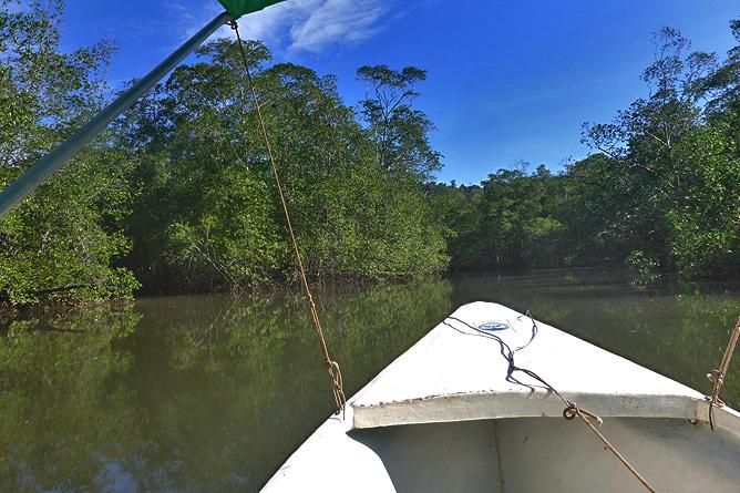 Isla Violín – Bootstour in den Mangroven