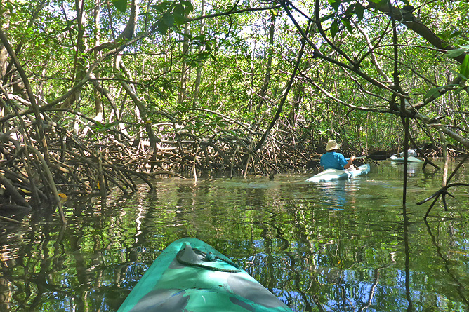 Isla Violin – Kajaktour, Mangroven