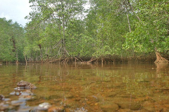 Isla Violín – Mangroventour