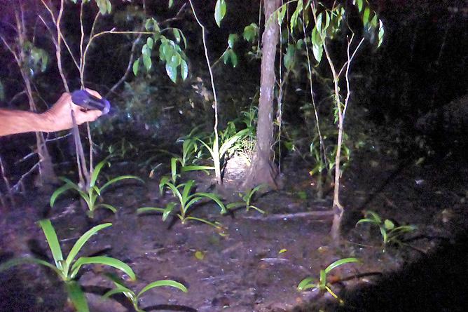 Isla Violín – Nachttour, Beobachtung nachtaktiver Tiere