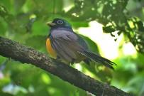Isla Violín - Vogelbeobachtung