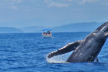 Isla-Violin_Wal-und-Delfinbeobachtungstour