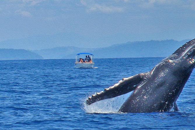 Isla Violín – Wal- und Delfinbeobachtungstour