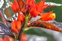 Isla-Violin_tropische-Blumen2_Evelyn