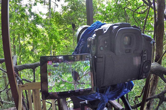 Maquenque Lodge – Kamera, Fotoaufnahme von Affe