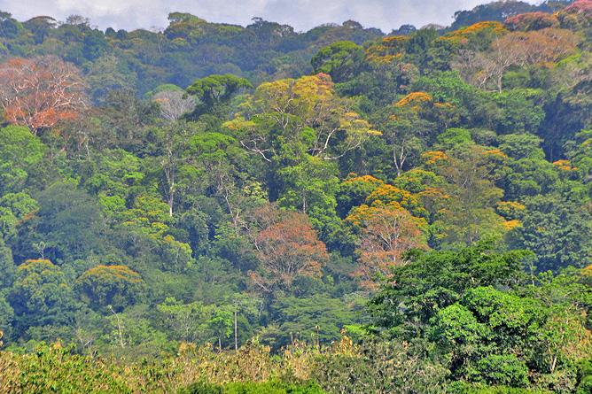 Maquenque Lodge – Wildarten-Refugium Boca Tapada