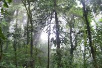 Monteverde_Nebelwald_Foto-Matthias-2012-(10)