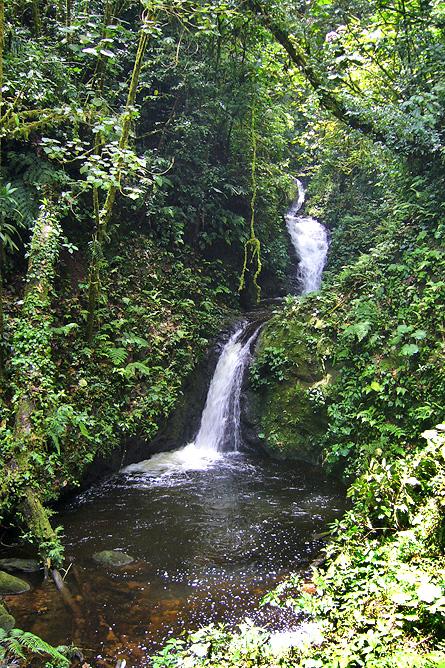 Monteverde Nebelwald – Wasserfall