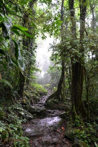 Monteverde_Nebelwald_Foto-Matthias-2012-(6)