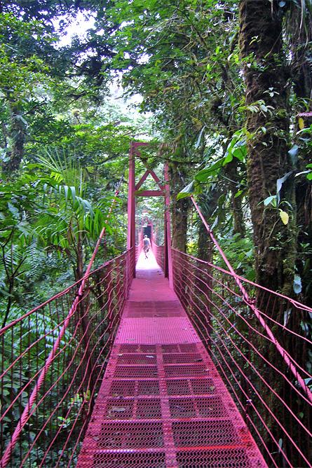 Monteverde Nebelwald – Hängebrücken