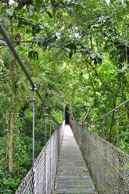 Monteverde Nebelwald – Hängebrücken-Park