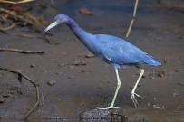 Rafiki-Beach-Camp-_Wasservogel
