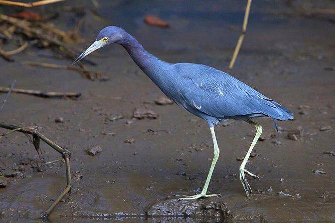 Rafiki Beach Camp – Wasservogel
