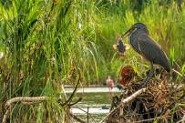 Rafiki-Safari-Lodge_-Mangroven_Wasservoegel