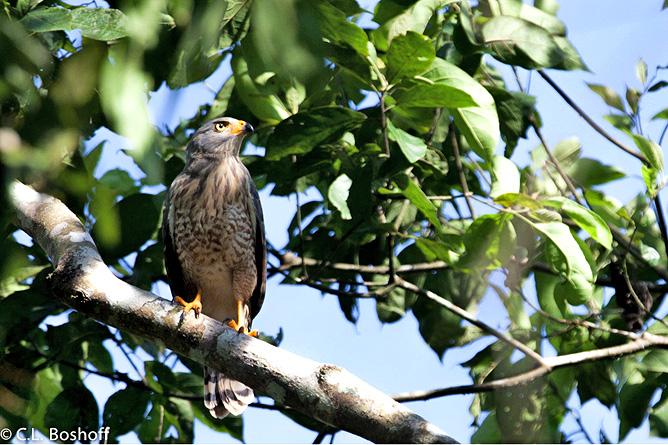 Rafiki Safari Lodge – Vogelbeobachtung