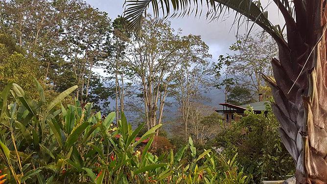 El Pelicano Wald