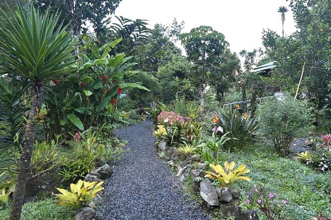 Orchideengarten Valle Chirripó