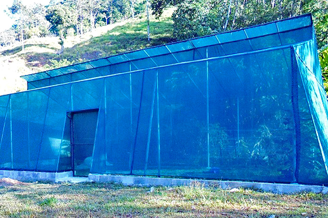 Los Campesinos Eco Lodge – Finca, Gewächshaus