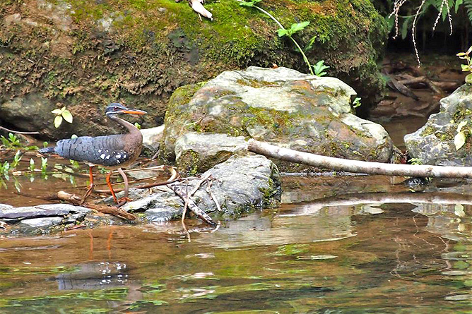 Los Campesinos Eco Lodge – Wasservogel am Fluss