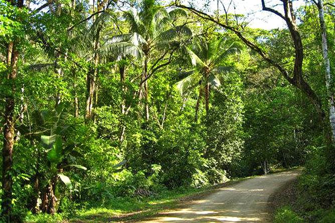 Rio Tico Lodge Zufahrtsstrasse
