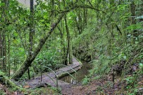 Sueños-del-Bosque-_Wanderwege