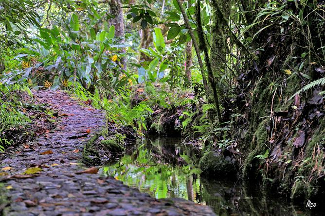 Sueños del Bosque – Weg durch das Grundstück