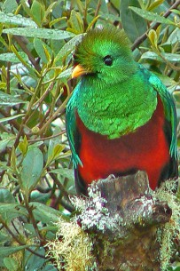Suenos-del-Bosque_Quetzal2