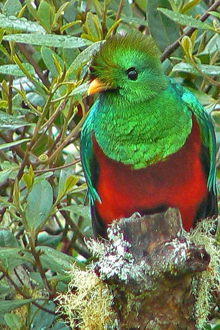 Sueños del Bosque – Quetzal