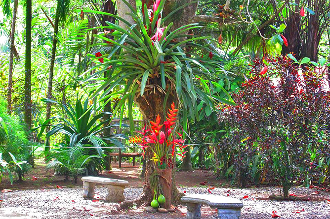 Tree of Life – Botanischer Garten