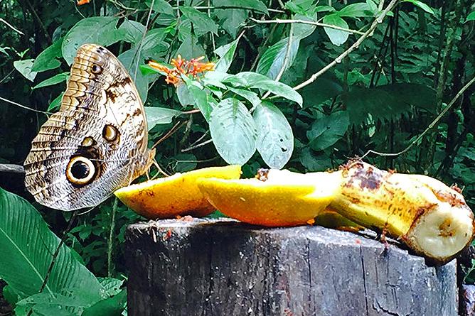 Arenal Oasis Schmetterlinge