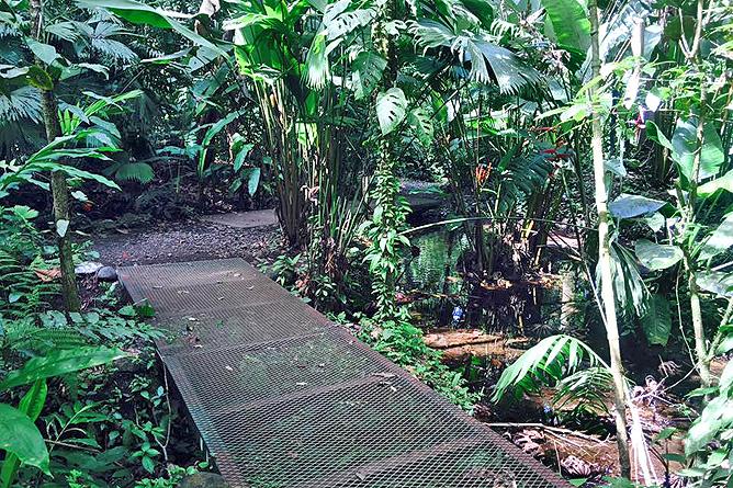Arenal Oasis Waldpfad