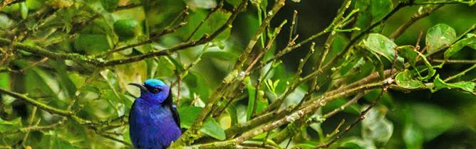El-Bosque_Vogelbeobachtung
