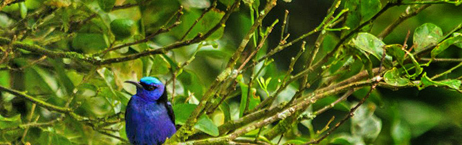 El Bosque Vogelbeobachtung