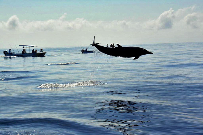 Samara Pacific Wal- und Delfinbeobachtung