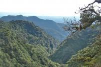 Monteverde_Nebelwald_Foto-privat-Christine_2014