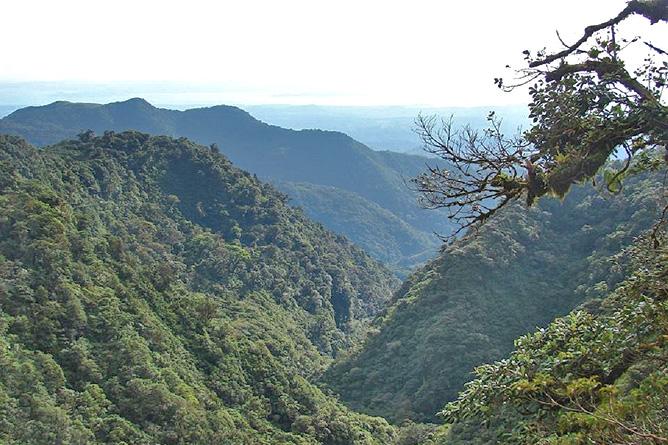 Monteverde Nebelwald