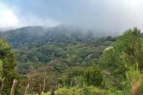 Monteverde_Tagestour-Nebelwald-Reservat_Foto-Ocotea-Tours_13-09-2017